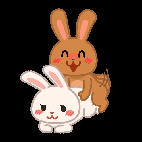交尾をするウサギ
